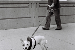 walk-the-dog-street-photography-1